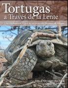 Tortugas A Traves De La Lente
